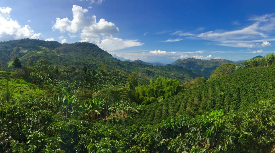 Coffee Plantation Views, Jardin